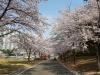 쇳물이 봄을 만난 사연!