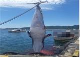 장기양포항에서 길이 5.4m 밍크고래 잡혀 4천여만원 판매!