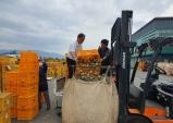 포항, 태풍피해 과일 1천9백톤 수매나서