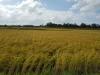 포항시, 올 해부터 친환경농산물 생산농가에 장려금 지급