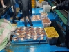 포항시, 암컷대게(빵게) 및 어린대게 1천여마리 불법 포획어선 검거